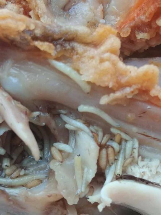 Мрежата изпадна в ужас от тези гнусни СНИМКИ 18+ на пилешко от KFC